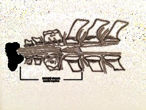 Konský chvost