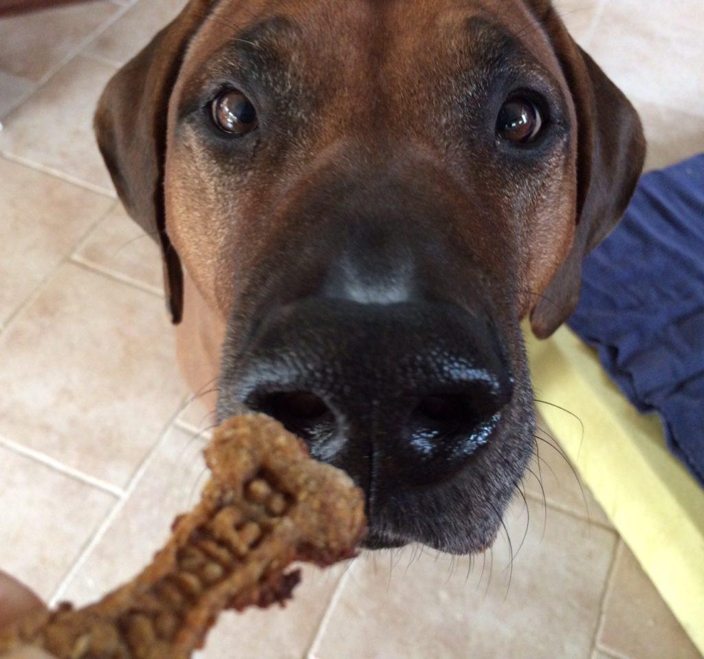 Nie celkom vegánsky recept na keksy pre psy d6a28012fec